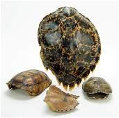 Three Turtle Shells.
