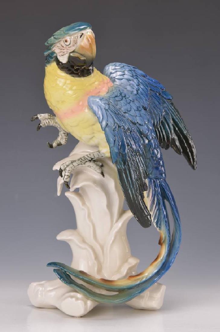 Large parrot, Ens