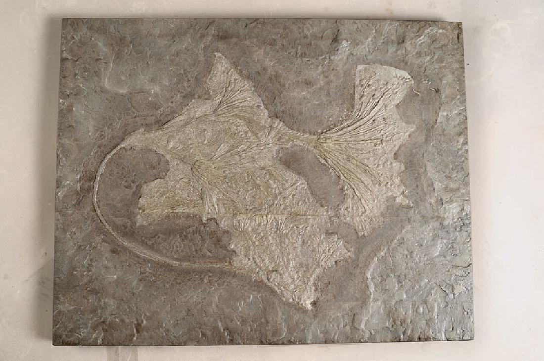 Fossil: Sea lilies