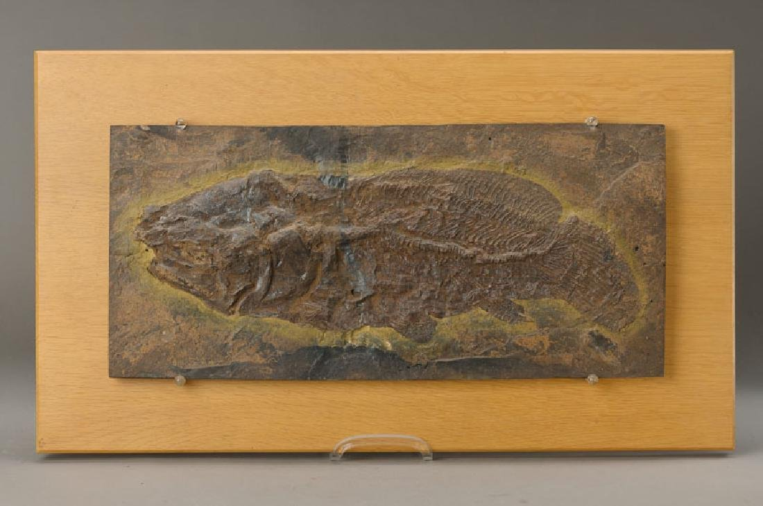 Fossil, cavern Messel