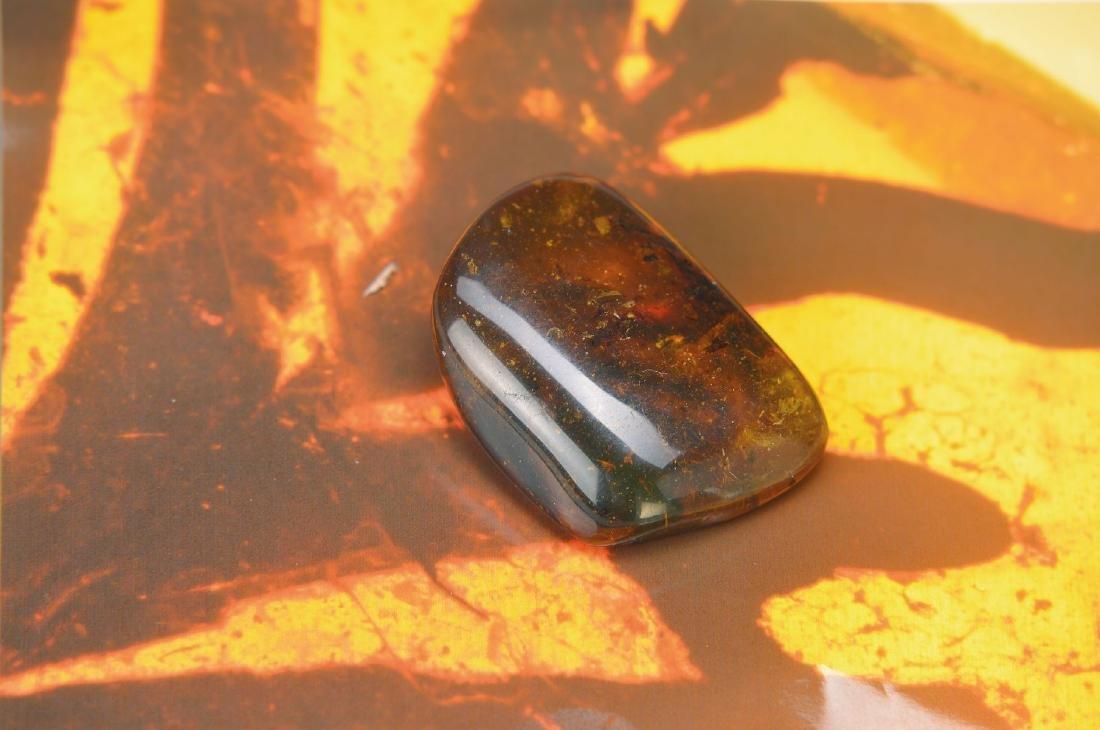 oldest amber