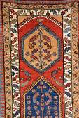 Northwest Persian 'Runner',