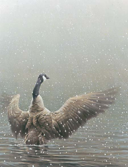 STRETCHING-CANADA GOOSE Giclee Canvas Signed and