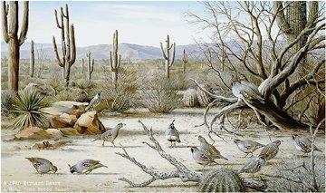 SONORAN DESERT-GAMBEL'S QUAIL Paper Signed and
