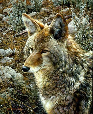 NATURAL SURVIVOR-COYOTE Paper Signed and