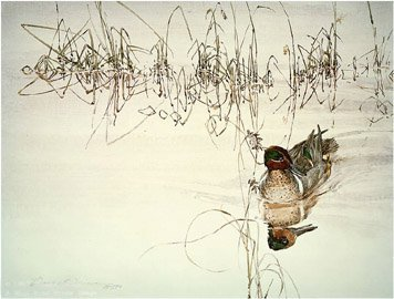 GREEN WINGED-TEAL DRAKE WITH GRASSES Paper Signed and