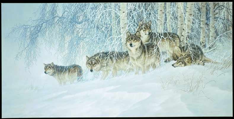 WINTER'S LACE-GRAY WOLVES Paper Artist Proof-FANNING