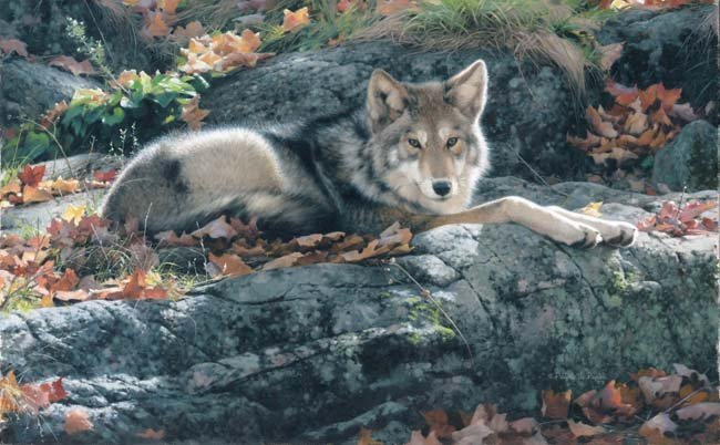 PATRICIA PEPIN…COZY LEDGE-COYOTE GICLEE CANVAS SIGNED