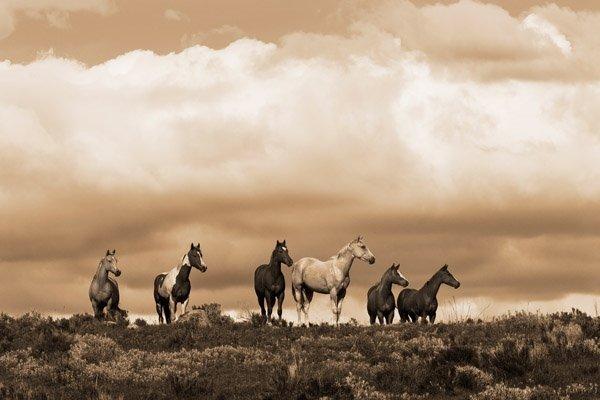 Robert Dawson - Prairie Song