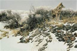 Coyote In Winter Sage