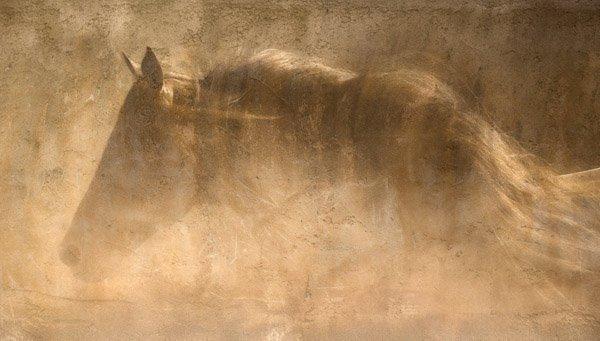 Robert Dawson - The Quarter Horse