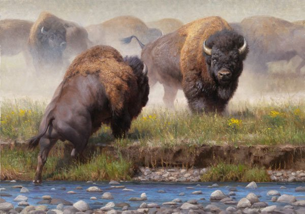 Kyle Sims - Yellowstone Face Off