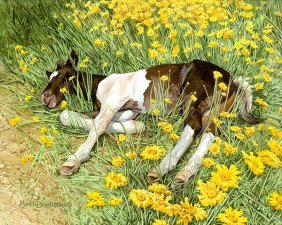Bev Doolittle - Spring Break