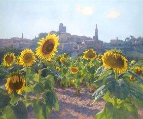 June Carey - Sunflowers Of Castiglion Fiorentino