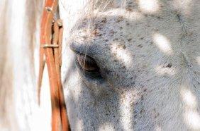 Tom Artin. Horse's Eye