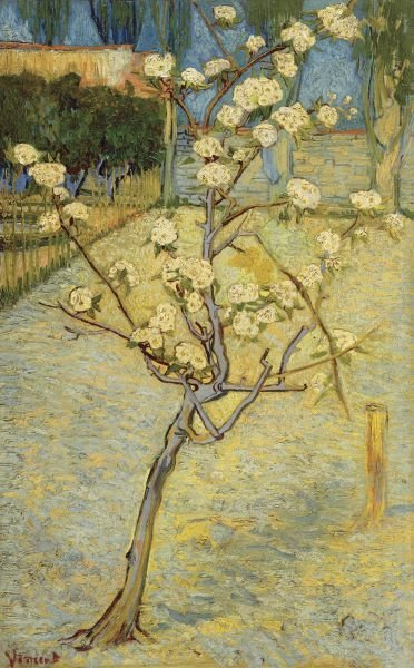 Vincent Van Gogh.  Small Pear Tree in Blossom, 1888