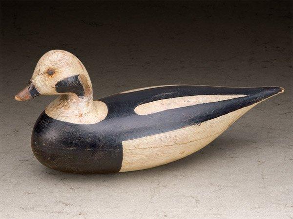 Robert Shaw - Shourds Long-tailed Duck