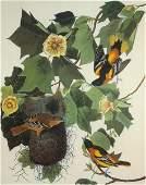 John James Audubon - Baltimore Oriole