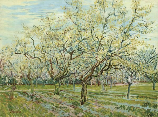 In The Manner Of Vincent Van Gogh.  The White Orchard,