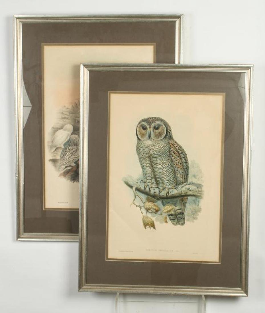 (2) COLOR LITHOGRAPHS OF OWLS J. WOLF & J .GOULD
