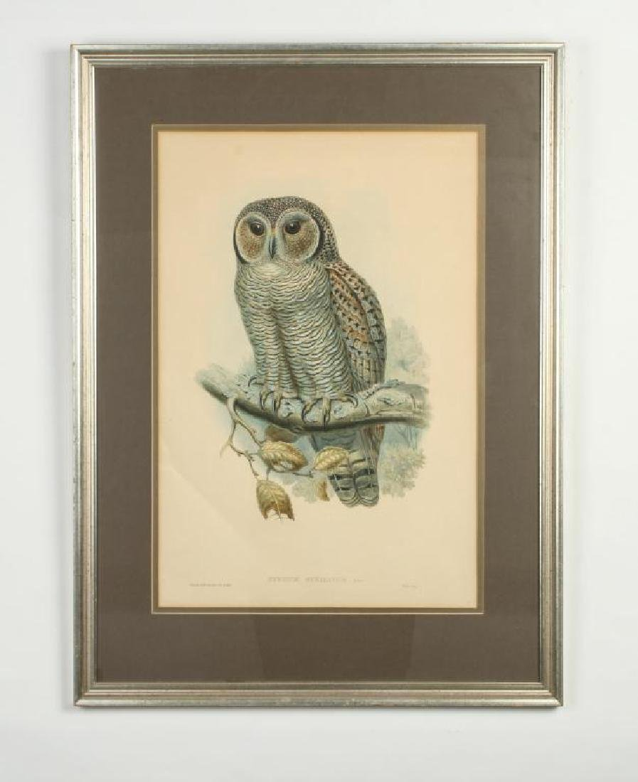 (2) COLOR LITHOGRAPHS OF OWLS J. WOLF & J .GOULD - 5