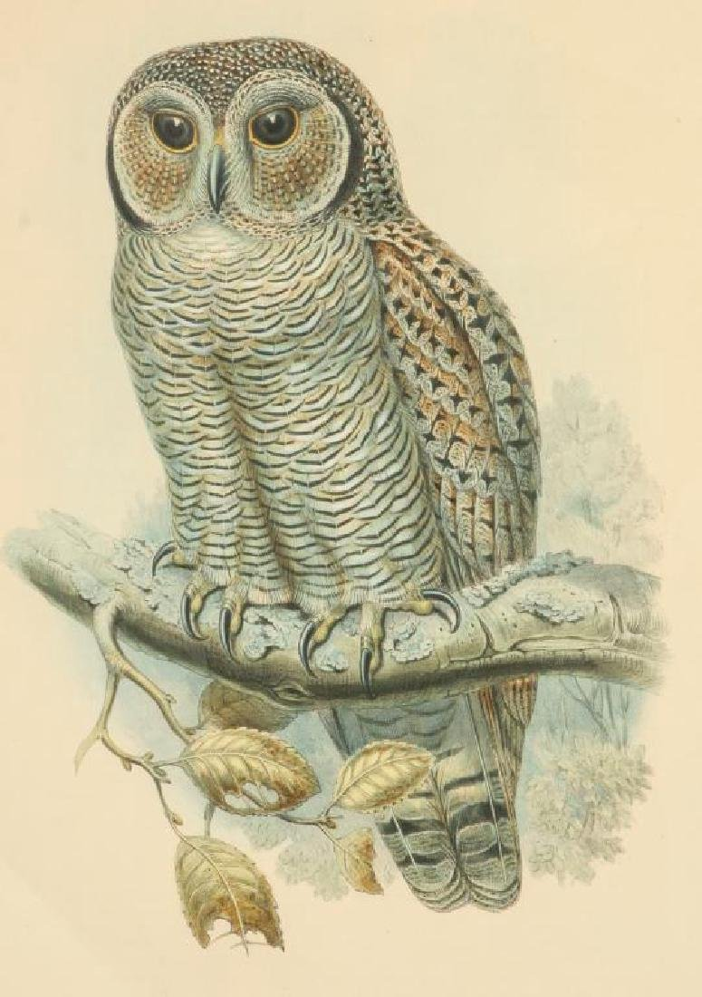 (2) COLOR LITHOGRAPHS OF OWLS J. WOLF & J .GOULD - 6