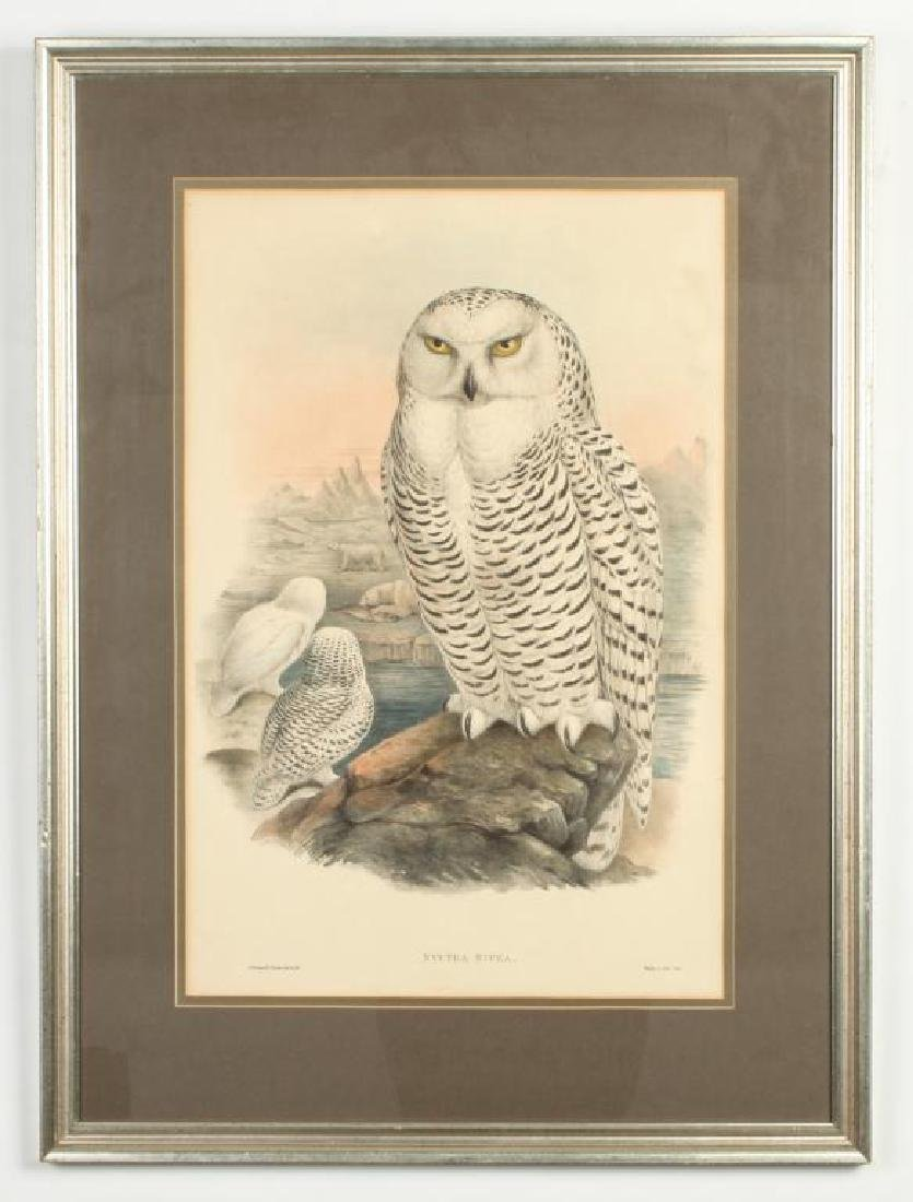 (2) COLOR LITHOGRAPHS OF OWLS J. WOLF & J .GOULD - 8