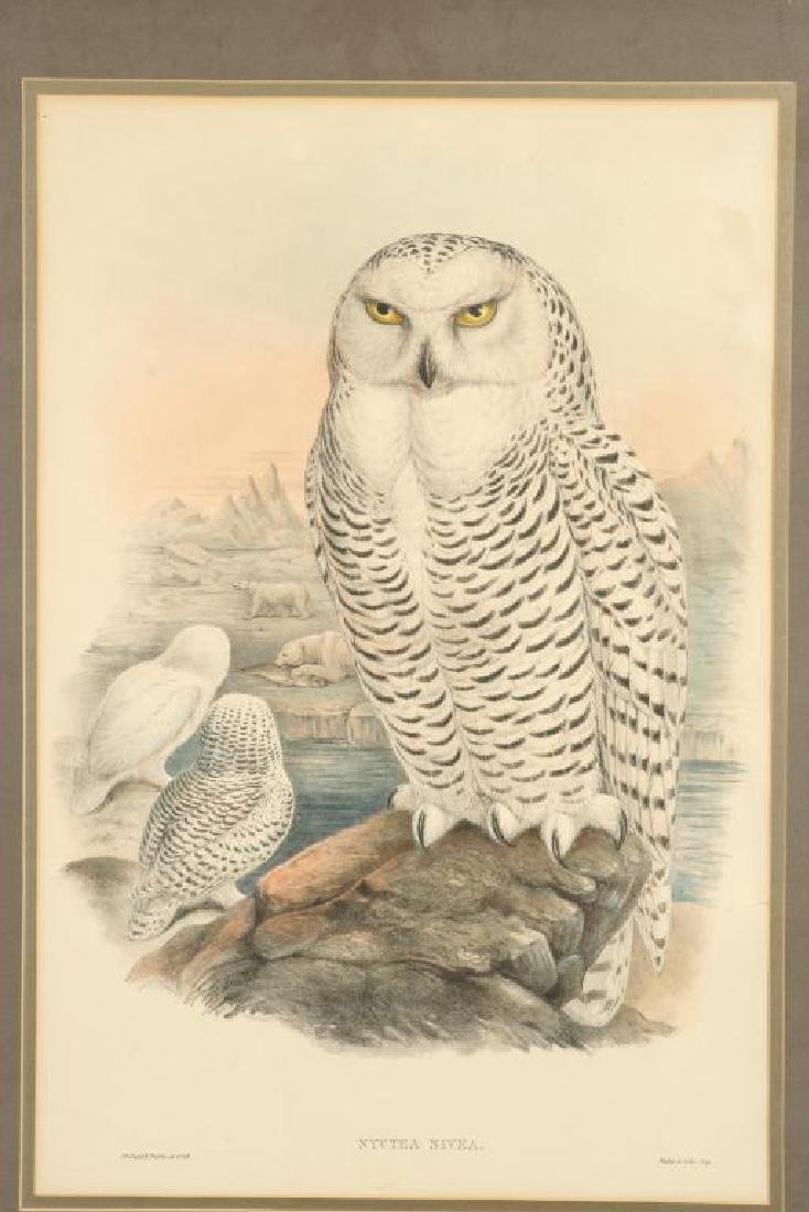 (2) COLOR LITHOGRAPHS OF OWLS J. WOLF & J .GOULD - 9