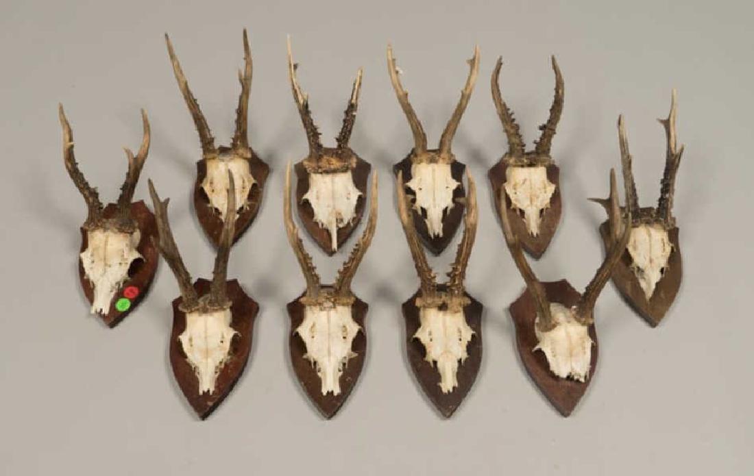 (10) MOUNTED ALPINE ROE DEER ANTLERS