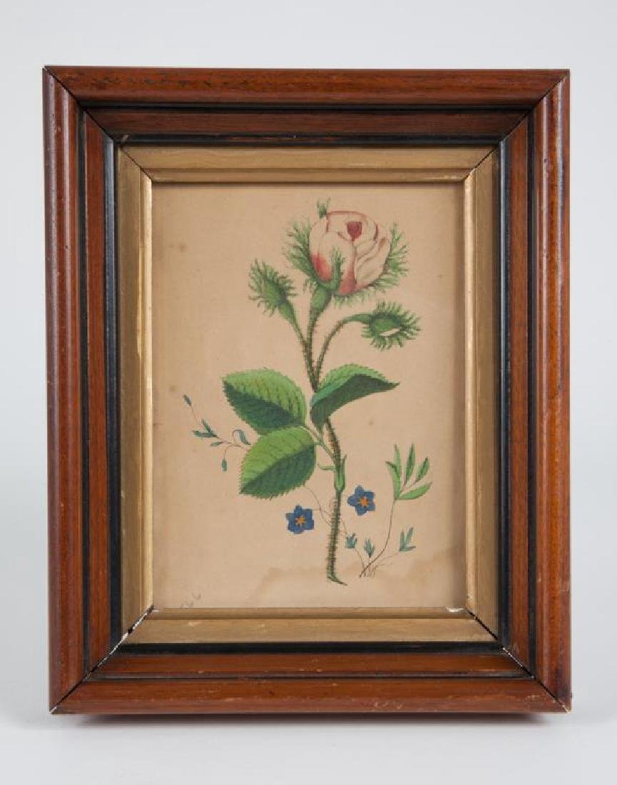 (19th c) FLORAL PRINT in a WALNUT FRAME