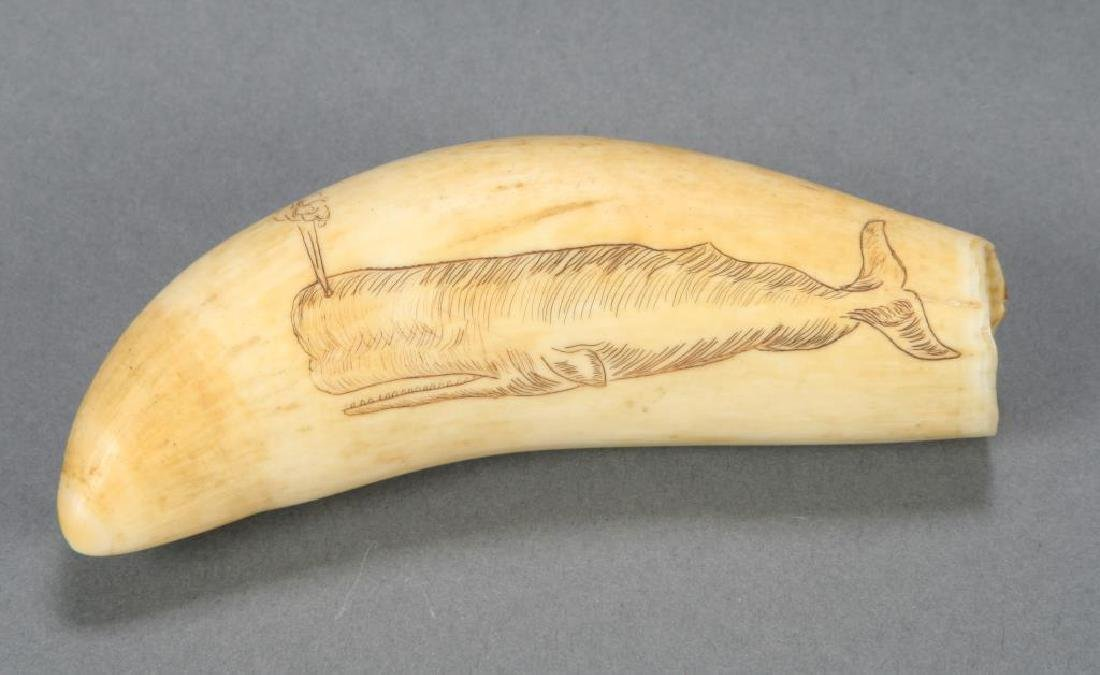 SCRIMSHAW WHALES TOOTH WOODS HOLE 1930