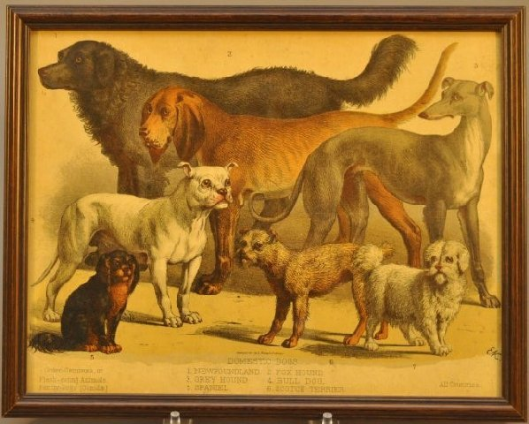 7: Early Prang lithograph of domestic dogs, Boston