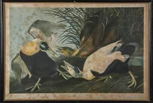 After JOHN JAMES AUDUBON (1785-1851)