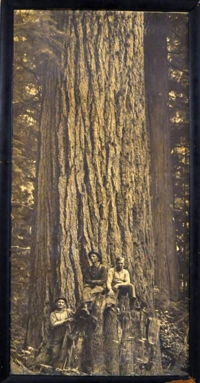 400A:  John D. Cress, American (1864-1940) Forest scene
