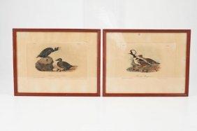 (2) J.j. Audubon Lithographs Printed By Bowen