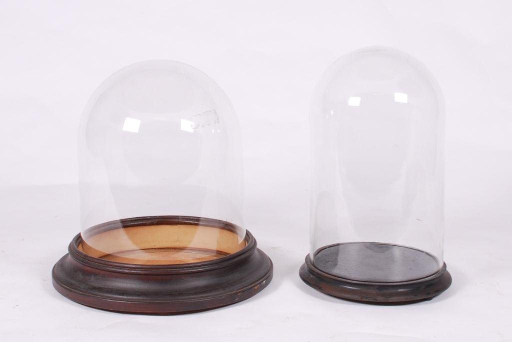 (2) GLASS DISPLAY DOMES & (2) BASES