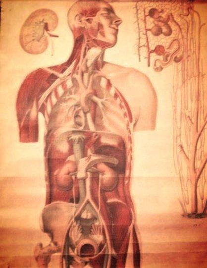 VINTAGE HUMAN BODY CHART ANATOMICAL EMIL HOELEMANN
