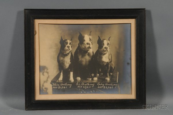 4: Framed Albumen Portrait Photograph of Three AKC Bost