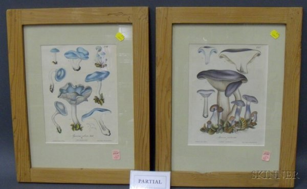 4: Six Framed Mycological Prints, German, 19th century,