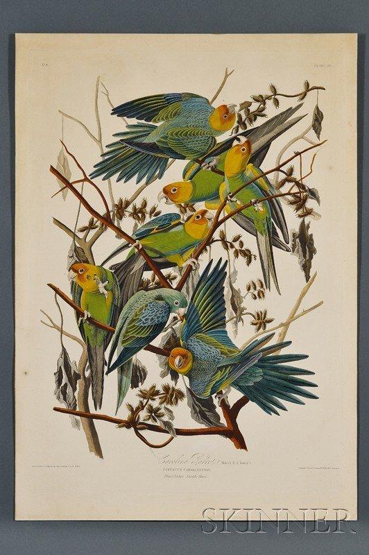 575: Audubon, John James, (1785-1851), Carolina Parrot,