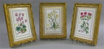 25: Set of Three Framed Royal Worcester Transfer Decora
