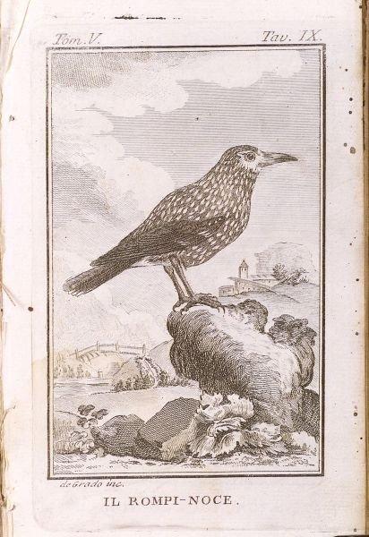 12: (Ornithology), Storia Naturale, Naples, 1778, one f