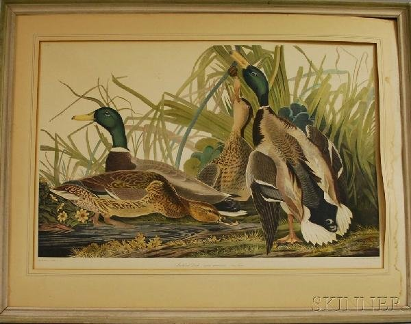 4: Reproduction Audubon Mallard Duck Collotype Print, a