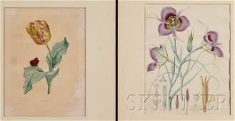 832 Botanical Illustration Six prints mostly late