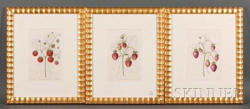 24: Three Framed Hand-colored Engravings of Strawberrie