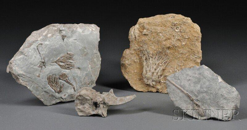2: Three Crinoids and a Vertebra Crinoids from Yorkshir
