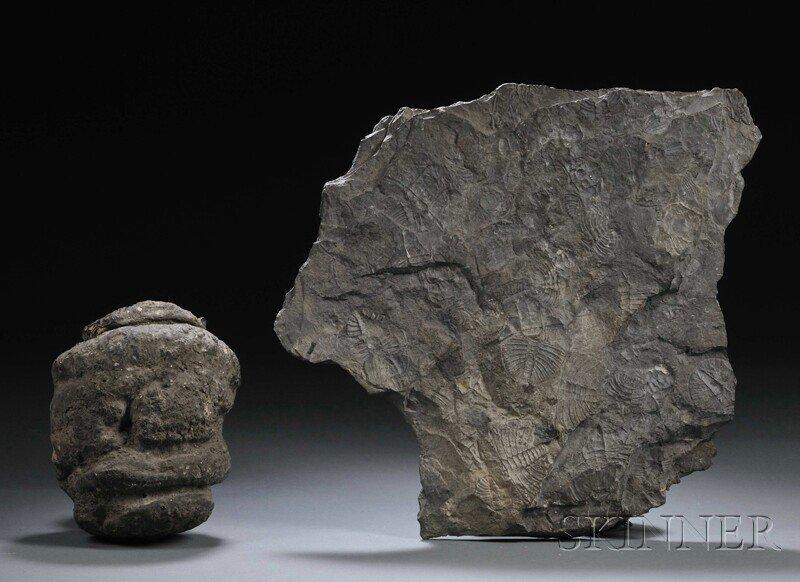 5: Trilobite and Sequoia Pinecone Ontario, Canada, and