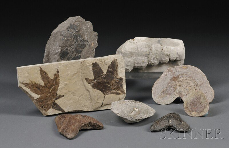 10: Group of Eight Fossils Europe and North America Inc
