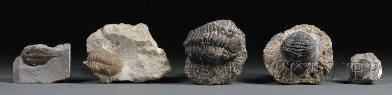 16: Five Trilobites Morocco, Russia, and New York Perio