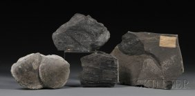Group Of Four Fossils England Includes A Ligillari